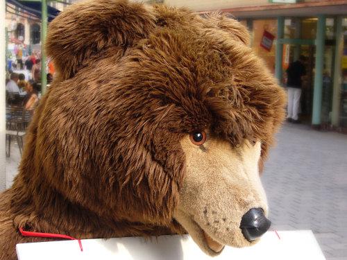 Steiff Bear in Wiesbaden