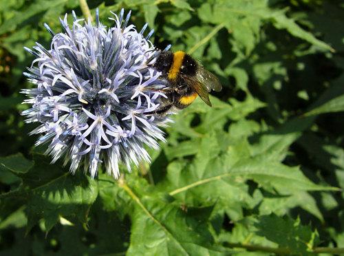 bumblebee shot with the macro function