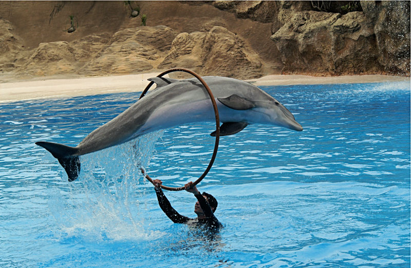 Dolphin show - dolphins as attractions animals