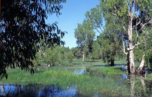 Cooinda, Northern Territory