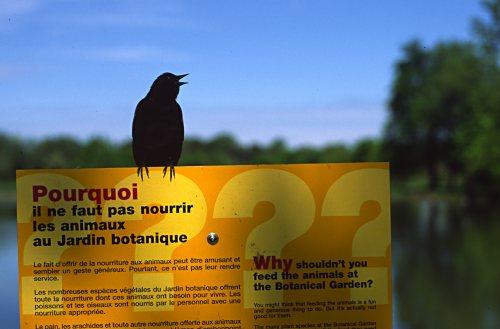 protesting bird