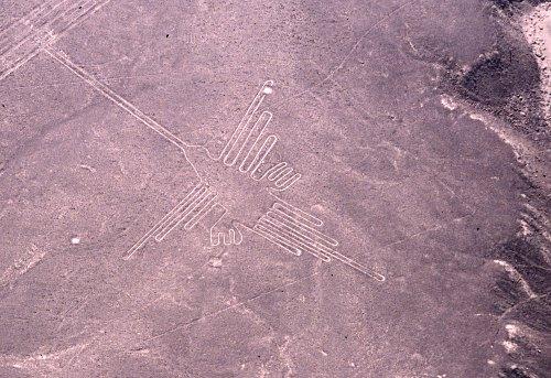 Nazca-lines: Colibri / humming bird