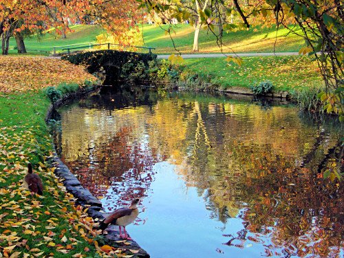 autumn colours in Wiesbaden