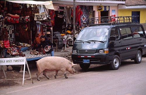 Pig in Pisac