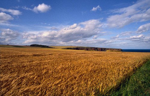 Arbroath Fields