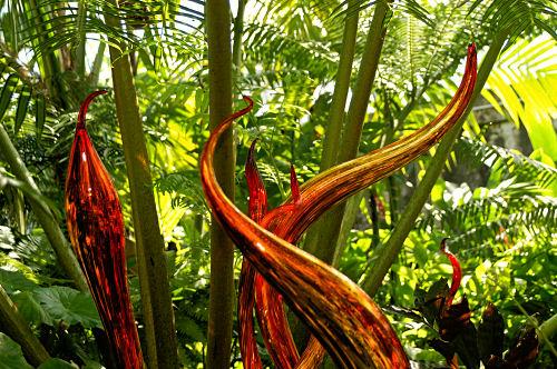 strange glass plants