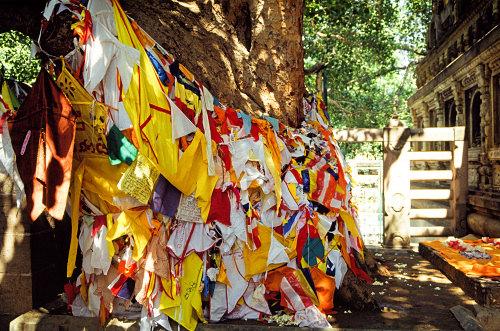 Bodhi Tree, Bodhgaya