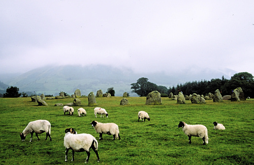 Sheep grazing in front of Castlerigg Stone Circle
