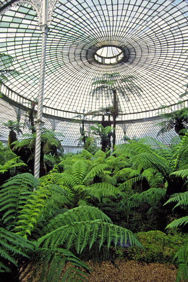 Ferns and palm trees in the Kibble Palace