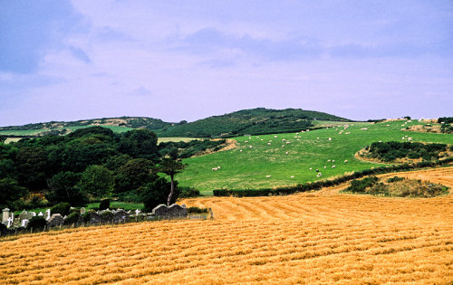 lush fields on the Isle of Man
