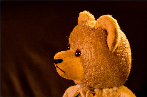 portrait of Senior, an old toy bear