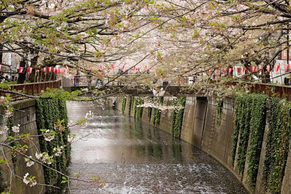 Megurogawa river, Tokyo
