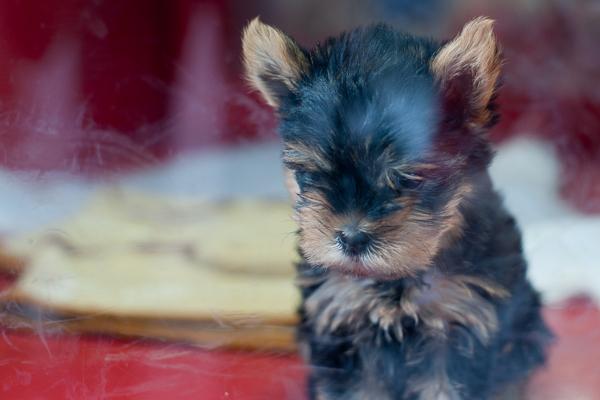 puppy in Himeji
