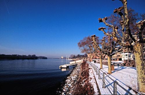 The river Rhein