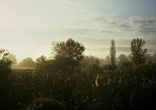 at dawn.