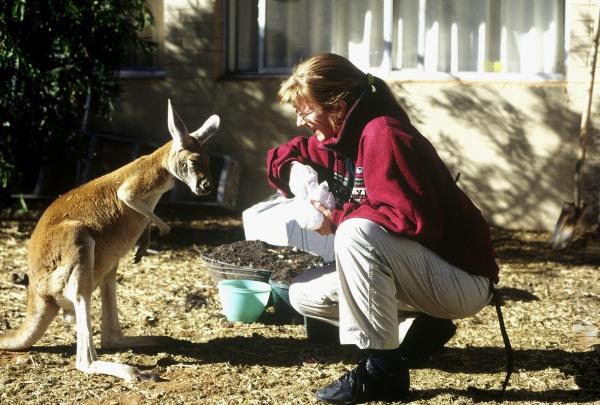 Strange encounter: Elvira and a tame kangaroo.