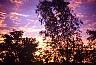 Darwin: trees - Dreamtime Australia: travel photography by Laurenz Bobke.