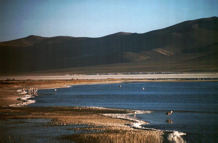 Andes: Salar de Surire. Photo: L. Bobke
