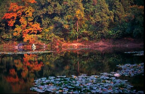 Autumn Lake: reflections .