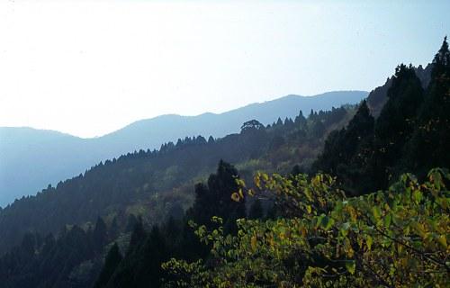 Woods and Mountains at Jinshan.