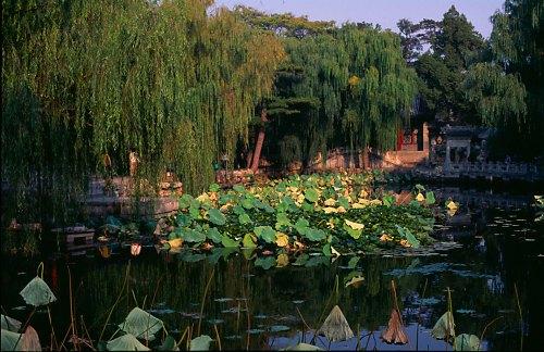 Lotos Pond.