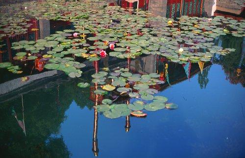 Lotos, Suzhou Street.
