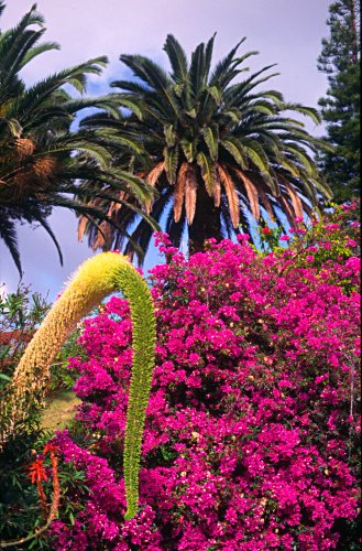 Blossoms and trees, Madeira, Portugal, Photo: Laurenz Bobke