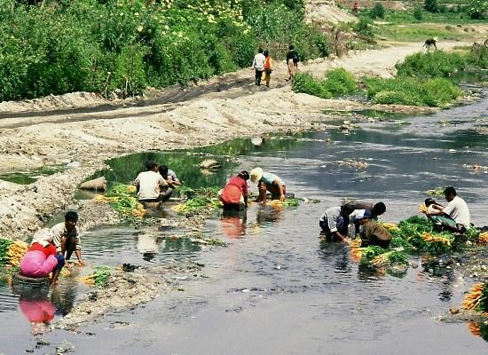 Washing vegetables in the Bagmati river, Kathmandu.