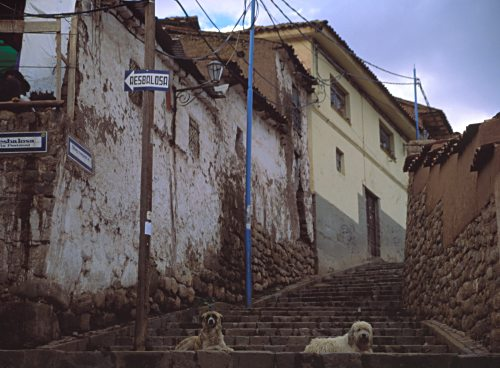 Two dogs sitting on the old steps leading up the hill.