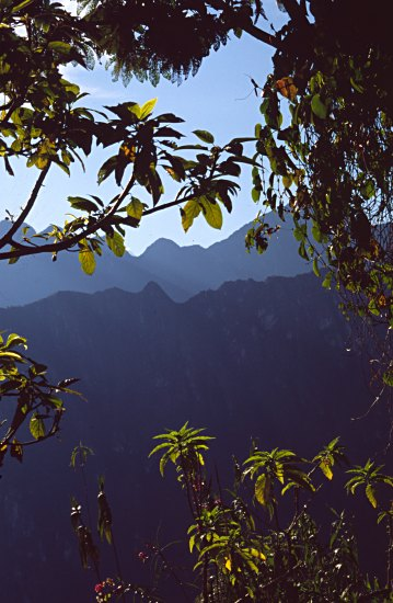 Trees and mountain panorama