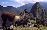 Pictures from Machu Picchu